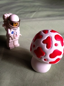 wah nemu jamur gede bngt :)